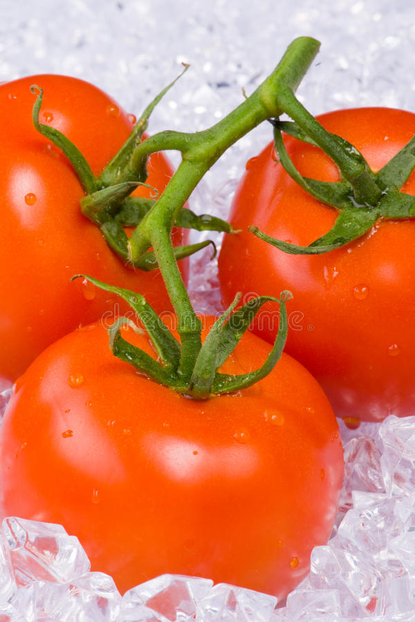 Download Tomatoes on ice stock photo. Image of refreshment, fresh - 14901662