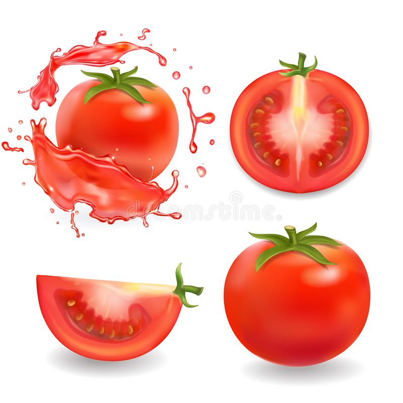 Tomatoes isolated realistic illustration. Whole, sliced tomato in juice splash vector illustration