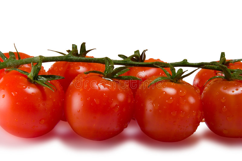 Tomatoes isolated on white. With clipping path stock image