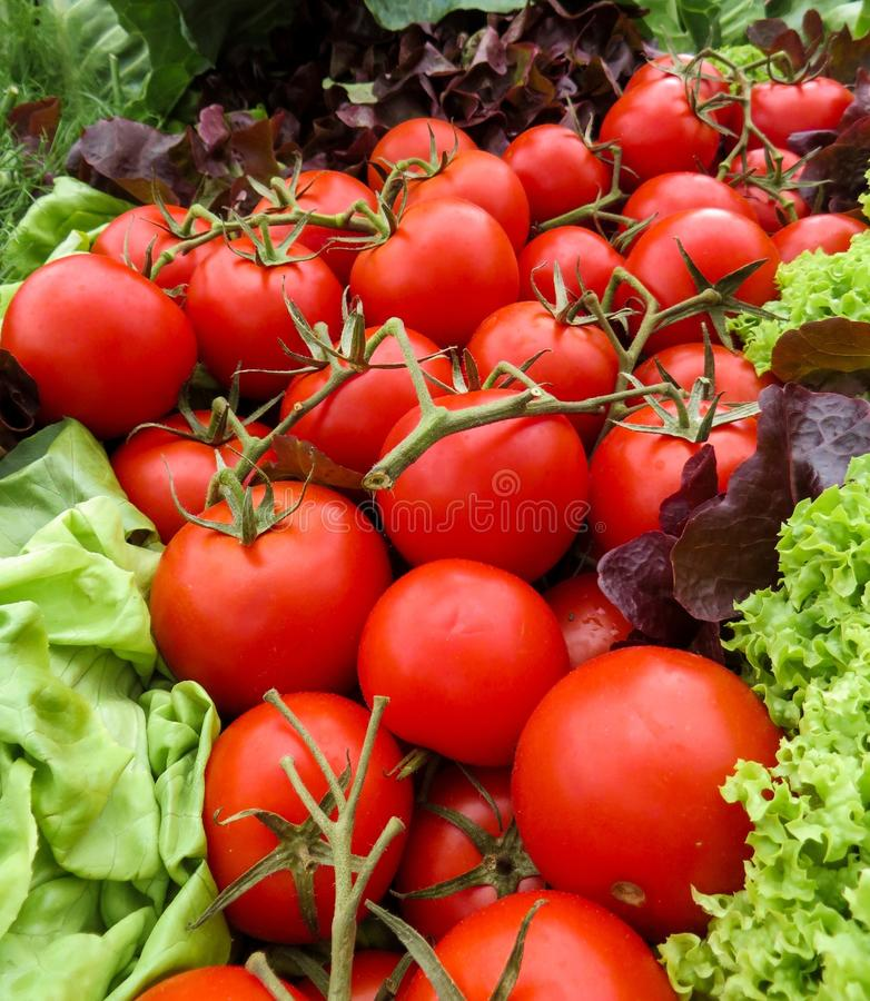 Tomatoes and lettuce stock photos