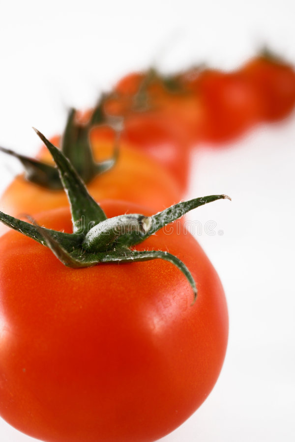 Tomatoes in line royalty free stock image