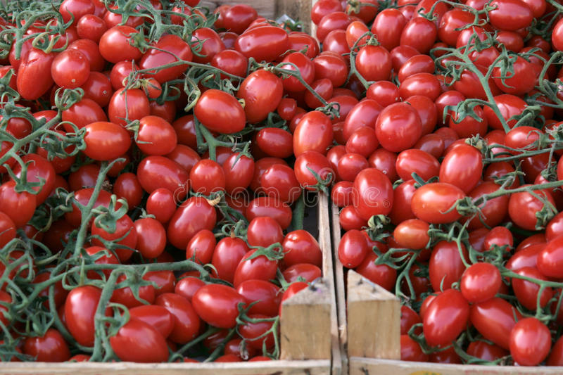 Tomatoes At The Market Royalty Free Stock Image