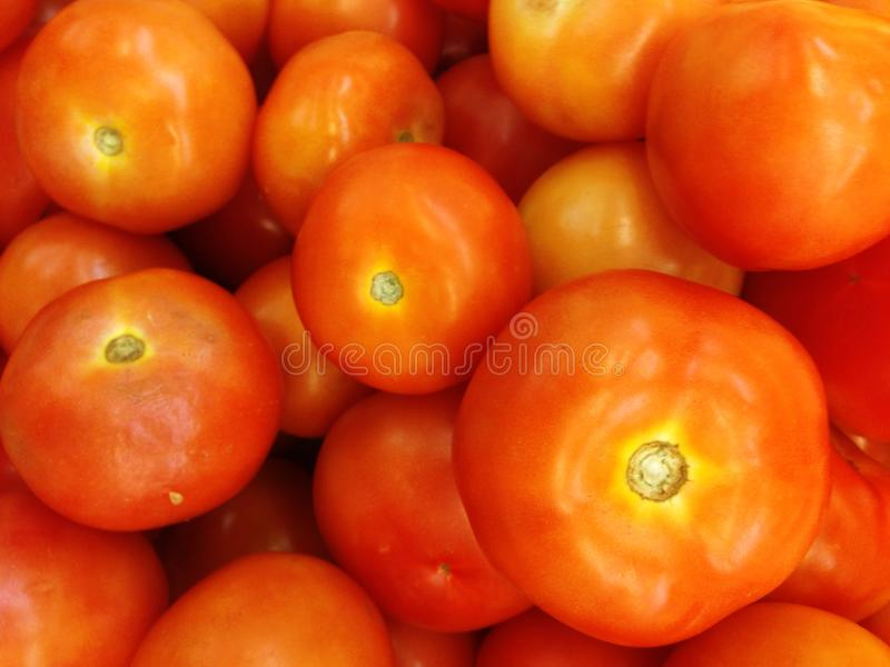 Tomatoes are a plant that is rich in nutritional value. Is a biennial plant, aged only 1 year. The stems are straight, bushy. When. The ripe fruit is yellow stock photo