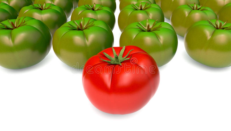 Tomatoes stock illustration