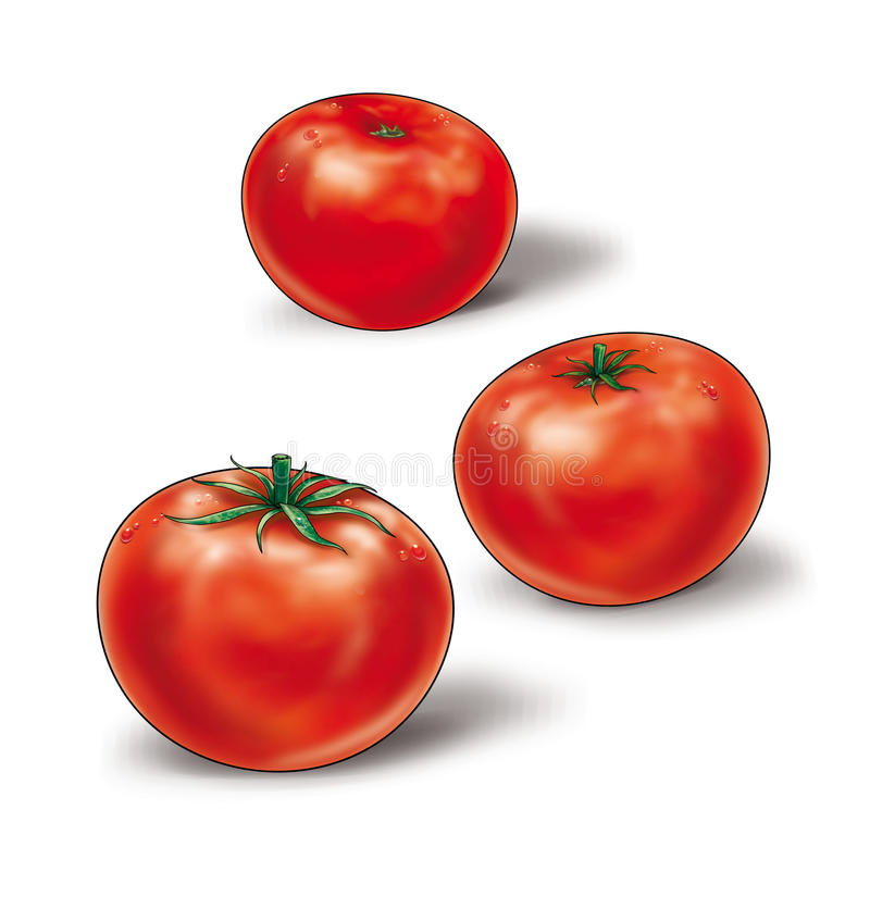 Tomatoes red. Three tomatoes on a white background. Still life high resolution of the illustration. Digital illustration for creation beautiful Still Life, art stock illustration