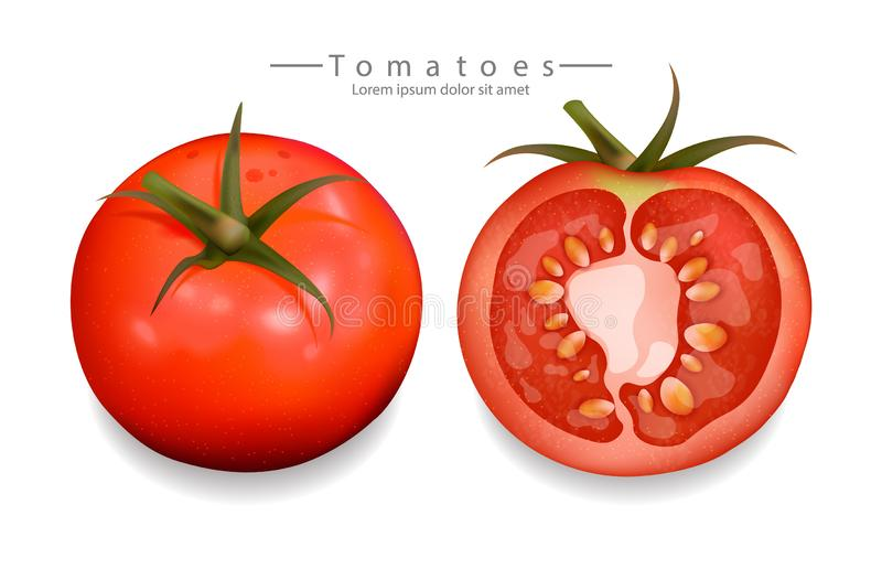 Tomatoes sliced isolated Vector realistic. Detailed 3d illustration template for label, icon, product placements. Tomatoes sliced isolated Vector realistic royalty free illustration