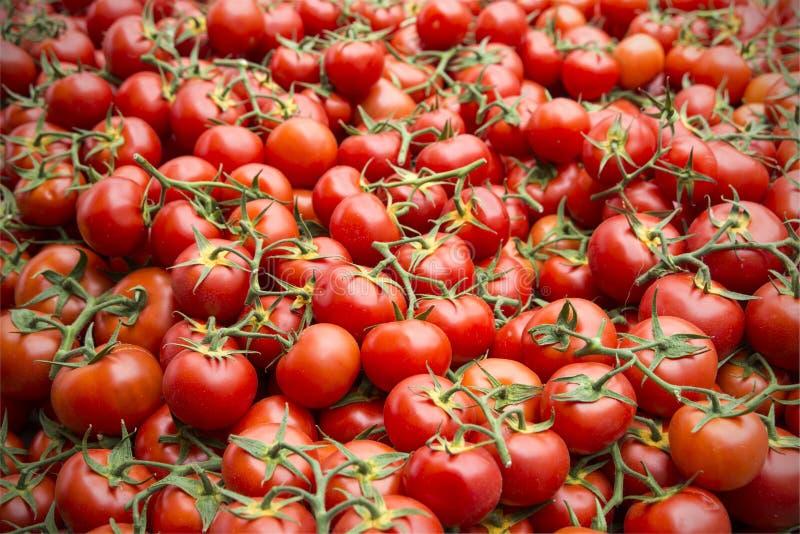 Tomatoes street market Provence royalty free stock image