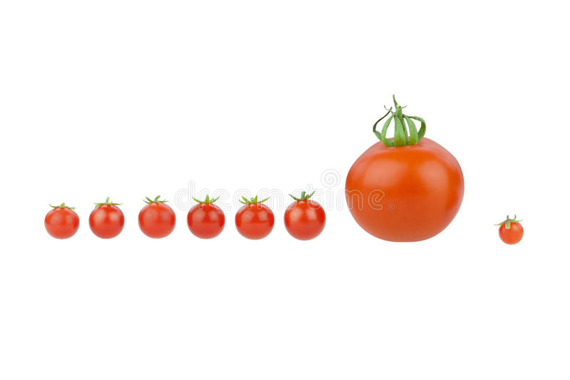 Download Tomatoes stock image. Image of color, line, fruit, leaves - 33564161