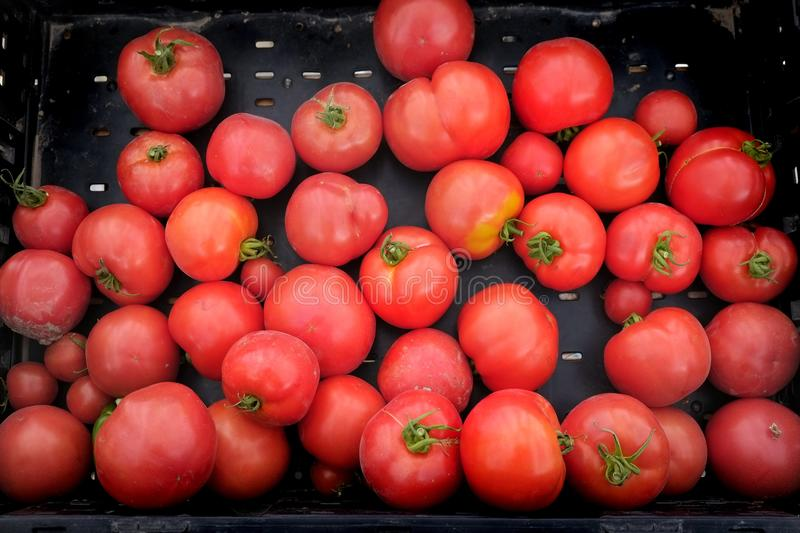 Tomatoes Tomatos Fresh Market in Bin for Sale royalty free stock photo