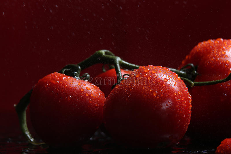 Tomatoes under water drops, red background royalty free stock photo