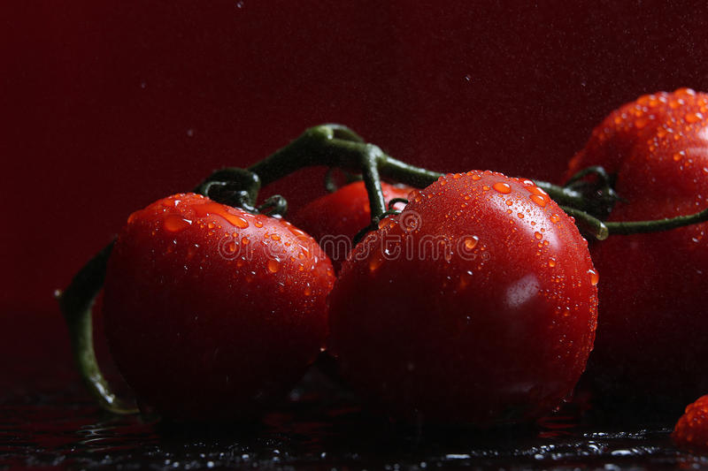 Tomatoes under water drops, red background stock photography