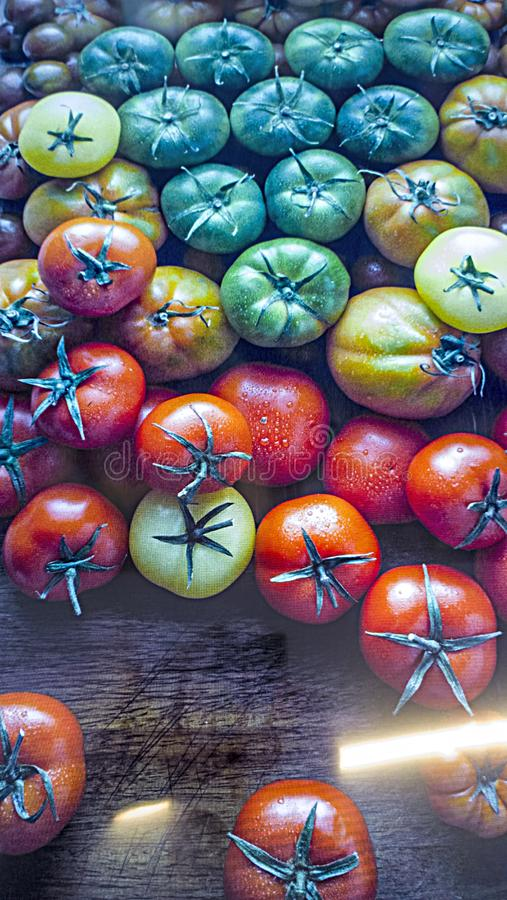 Tomatoes of various colors and ripening and aging. Ready for wallpapers and food advertise stock illustration