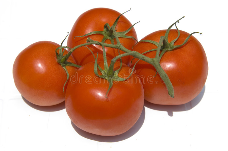 Tomatoes on a vine stock photography
