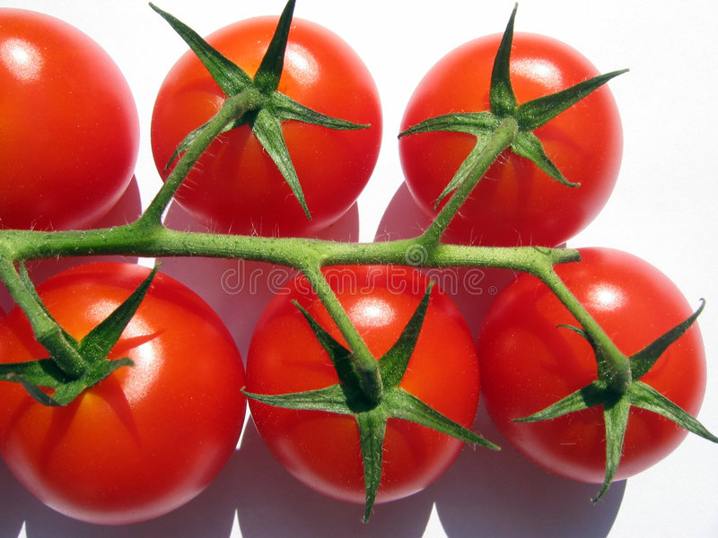 Download Tomatoes on the vine stock image. Image of small, fruit - 206333