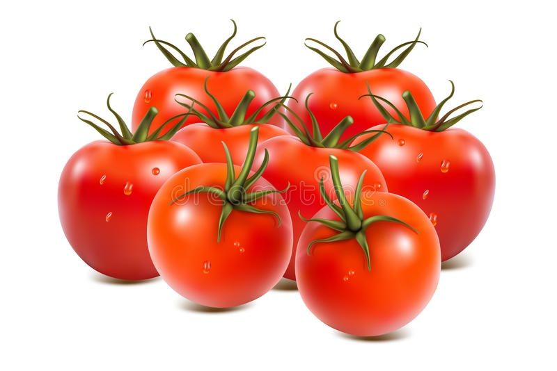 Download Tomatoes on  on white stock illustration. Image of nature - 26958838