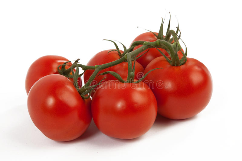 Tomatoes on White Background royalty free stock images