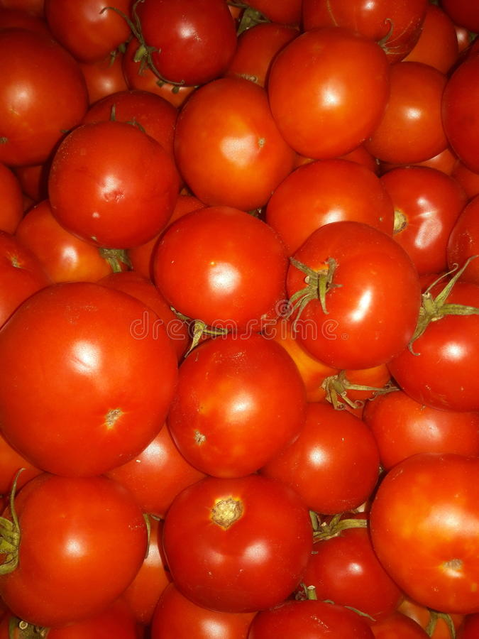 Tomatom arkivfoton