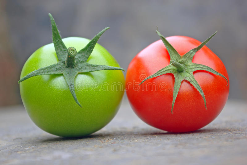 Tomatos stock photography