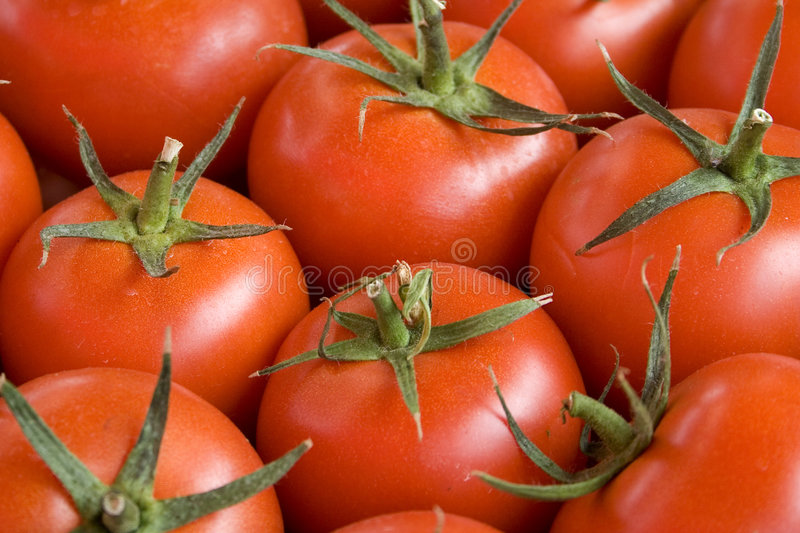 Download Tomatos stock image. Image of picture, form, surface, beauty - 3124097