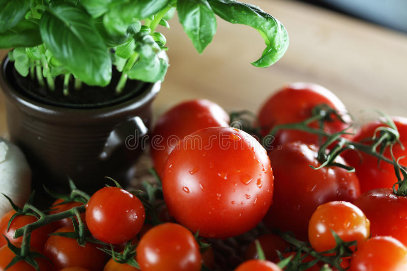 Tomatos and basil. Healthy fresh vegetables theme, tomatos, basil royalty free stock image