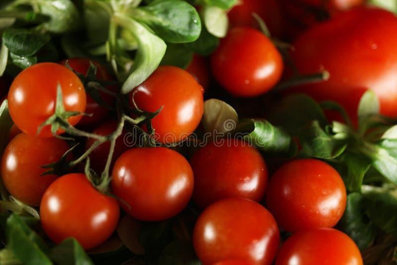 Tomatos and basil stock images