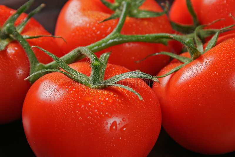 Tomatos in bunch stock image