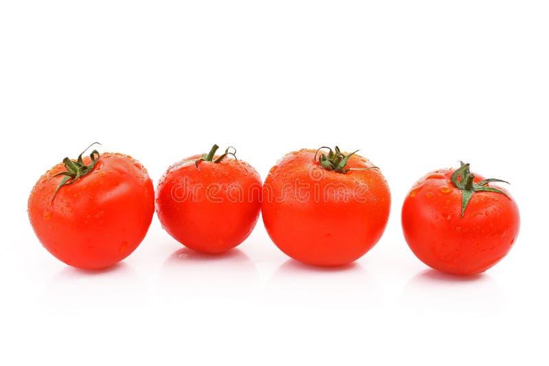 Tomatos in line stock photos
