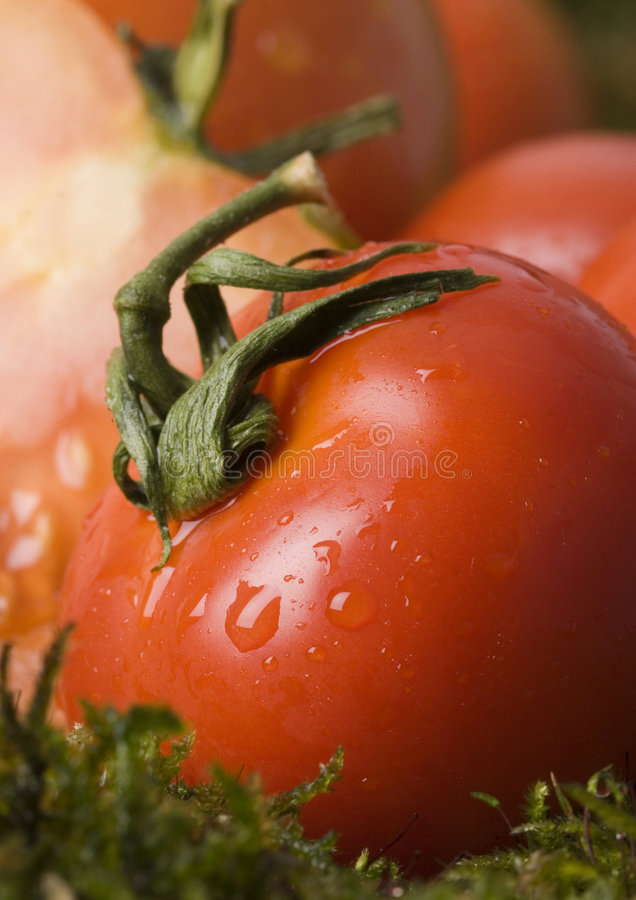 Free Tomatos On The Moss Stock Images - 2321314