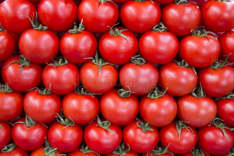 Tomatos in row as background stock photos