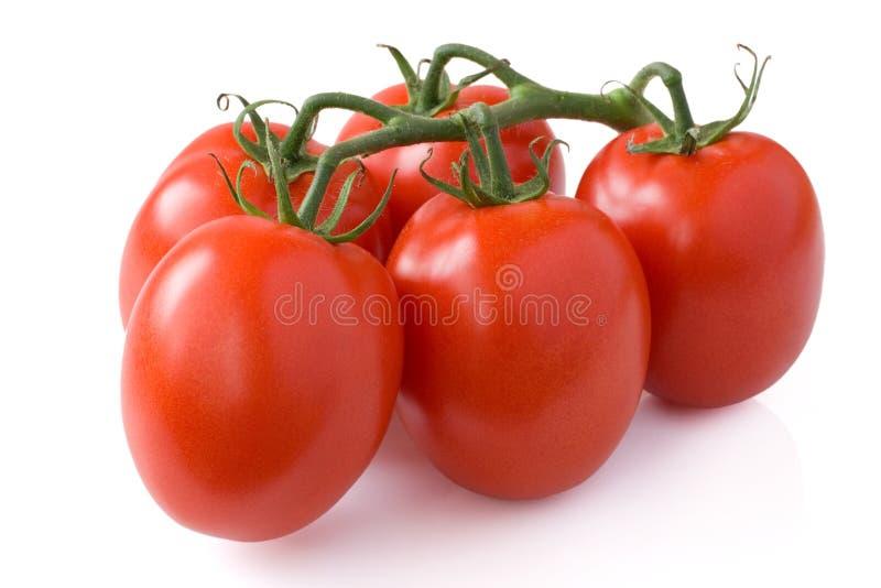 Tomatos twig. Twig of plum tomatos on white royalty free stock photo