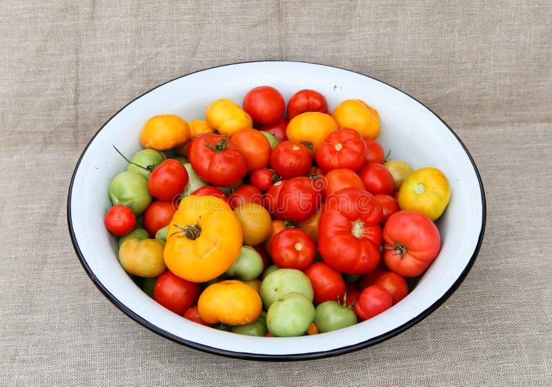 Tomatplockninghandfat royaltyfri bild