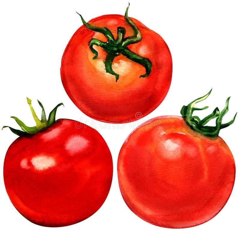 Tomatuppsättning som isoleras på vit bakgrund royaltyfri illustrationer