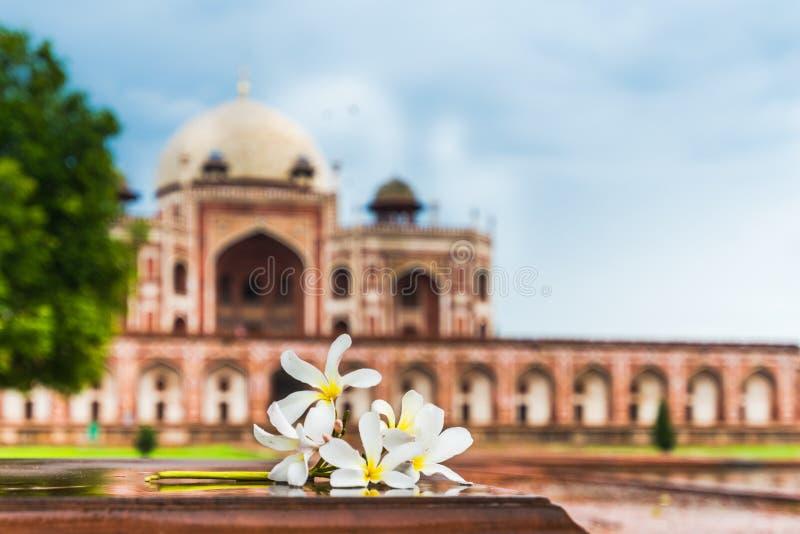 Tomba del ` s di Humayun e dei fiori immagine stock