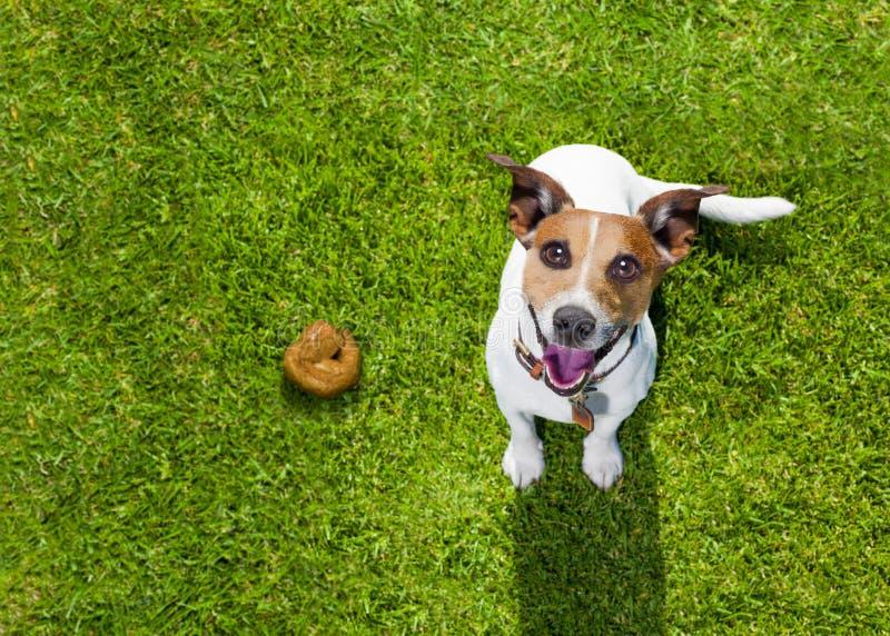 Tombadilho do cão na grama no parque imagens de stock royalty free