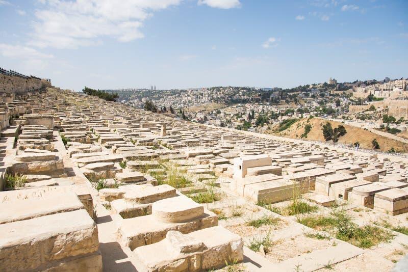 Tombes sur des olives de bâti photo libre de droits
