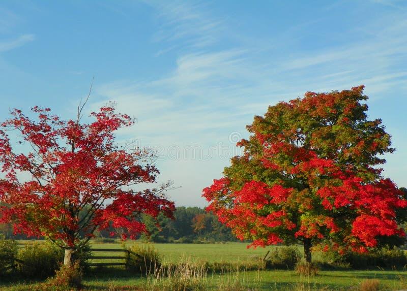 Tombez dans le pays avec les arbres d'érable rouge, la barrière de rail fendu et le b photo libre de droits