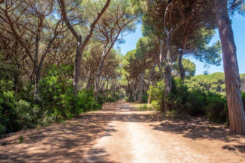 Tombolo Di Feniglia, Tuscany, Włochy, który łączą górę Argentario Włoski kontynent obrazy royalty free