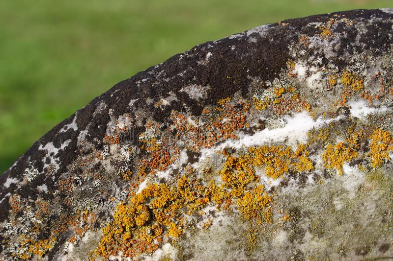 Tombstone decay in colors of lichen and moss royalty free stock image