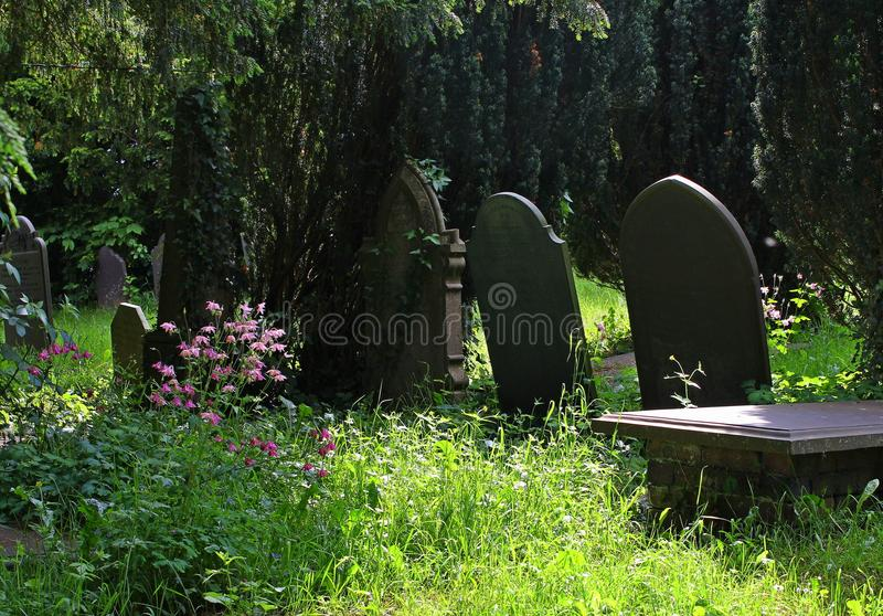 Tombstones, old, in shaded country cemetery. Tombstones, gravestones, old, in a sunlit and shaded country cemetery, with beautiful pink wild flowers stock photos