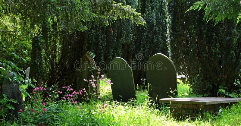Tombstones, old, in shaded country cemetery. Tombstones, gravestones, old, in a sunlit and shaded country cemetery, with beautiful pink wild flowers stock photo