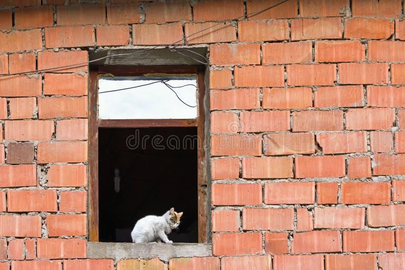 Tomcat dans la fenêtre du bâtiment du facework de facework photographie stock