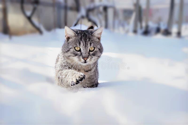 Tomcat dans la neige photo stock