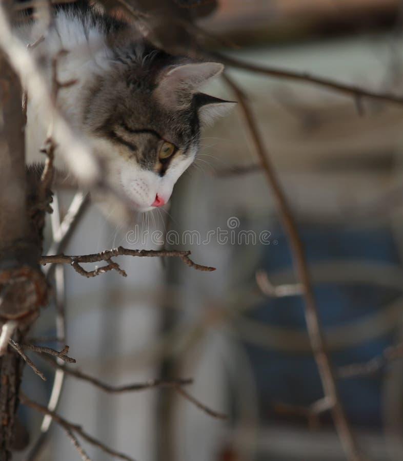 Tomcat em um fundo de ramos de árvore imagem de stock