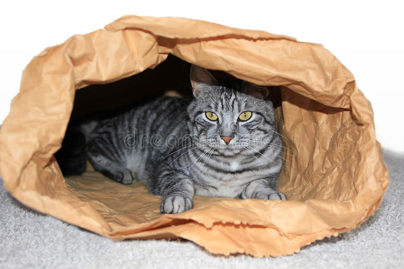 Tomcat in a paper sack. Sweet tomcat in a paper sack royalty free stock images