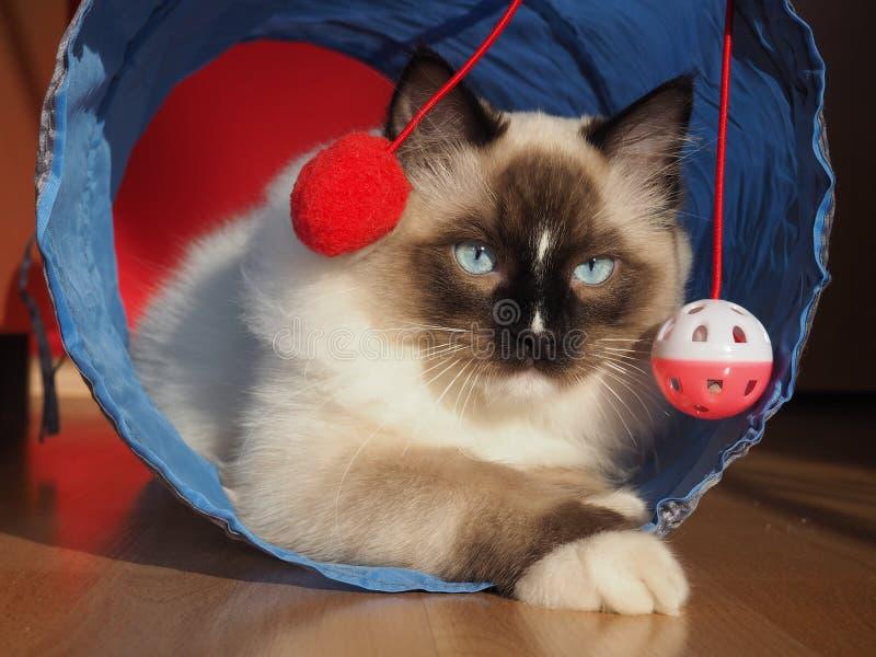 Tomcat Riky photos stock