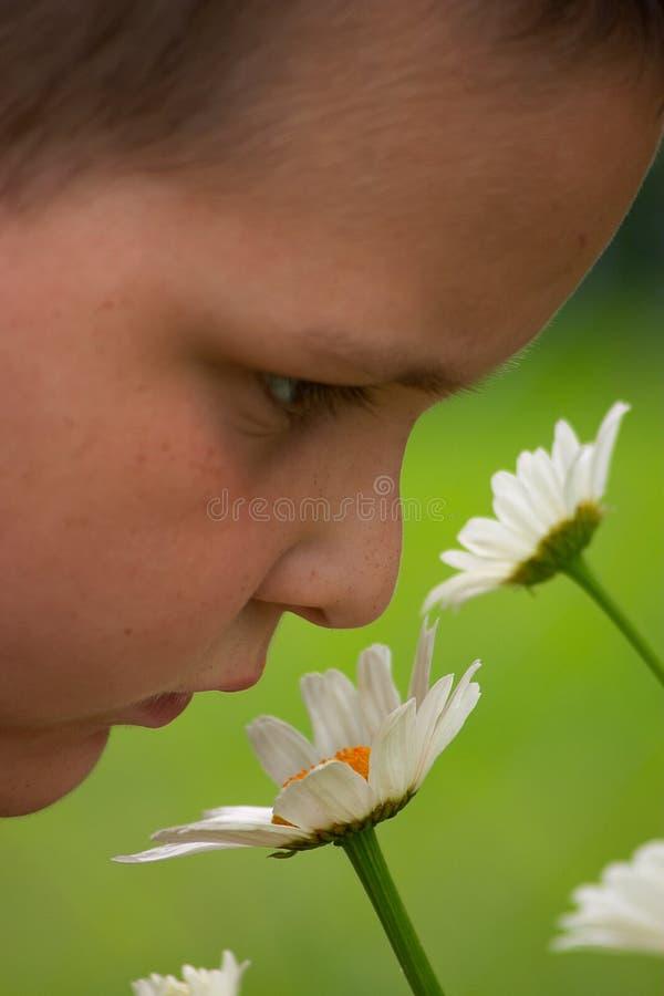 Tome o tempo apreciar as flores imagens de stock