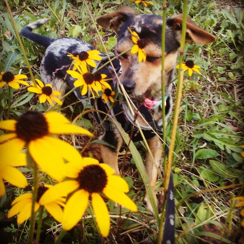 Tome o tempo cheirar as flores fotografia de stock royalty free