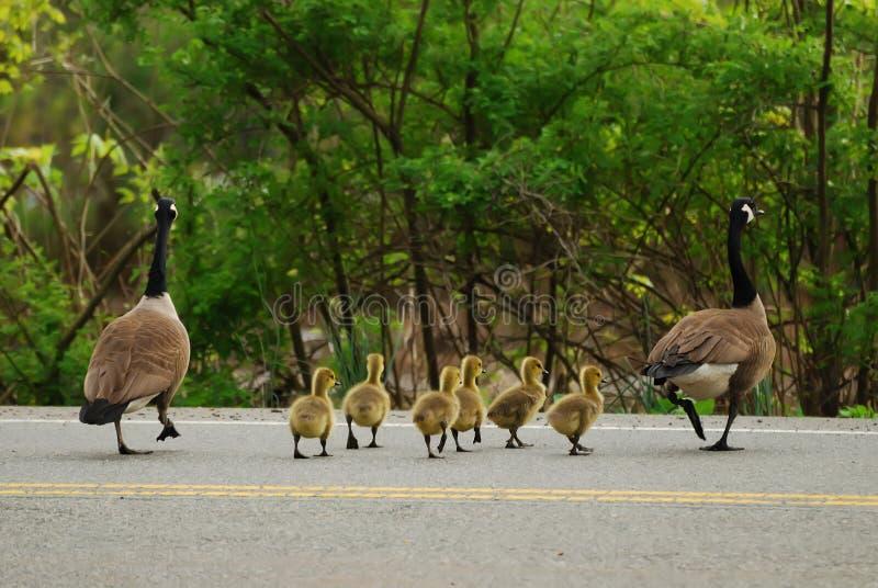 Tome uma caminhada. foto de stock royalty free
