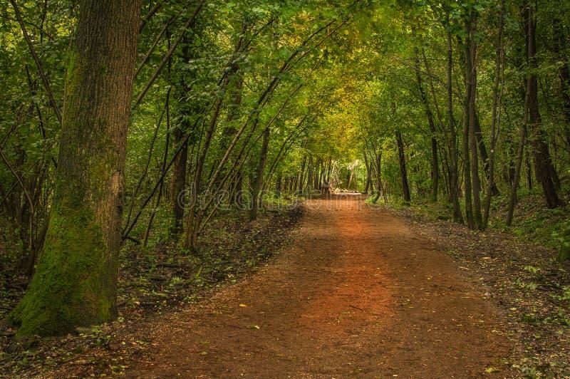 Tome uma caminhada em uma madeira italiana imagem de stock royalty free