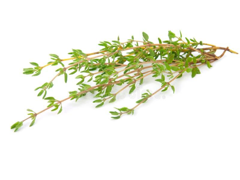 Download Tomilho imagem de stock. Imagem de herbs, verde, sabor - 16858343